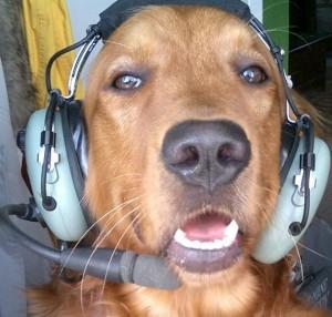 pilot-dog